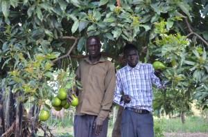 Lasu & Santino and average size avocados from Kendila