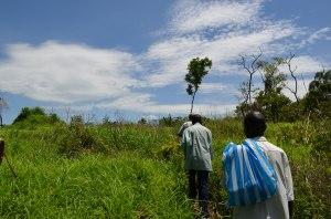 The path in Gilumbi